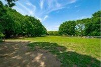 周辺環境:代々木公園