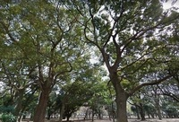 周辺環境:代々木公園160m