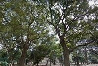 周辺環境:代々木公園1000m
